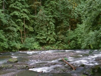 USA, Oregon. Willamette National Forest, South Santiam River and lush old growth forest.
