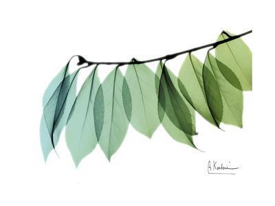 Camelia Leaf Green_Blue
