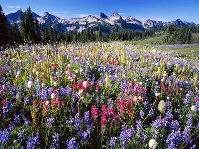 Wildflower Meadow and Tatoosh Range