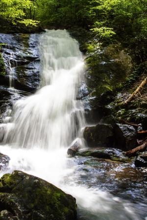 Deep Woods Waterfall I