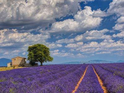 France, Provence, Old Farm House in Field of Lavender