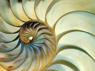 Close-up of Nautilus Shell Spirals