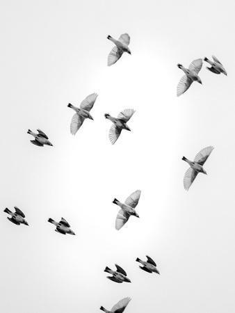 In the Sky 1