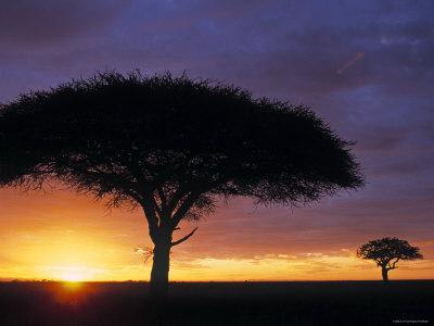 Acacia Tree at Sunrise, Serengeti National Park, Tanzania