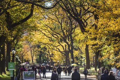 People walking in a park, Central Park Mall, Central Park, Manhattan, New York City, New York St...
