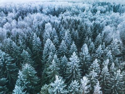 Blue Background Texture of a Frozen Forest at Winter, Aerial Shot