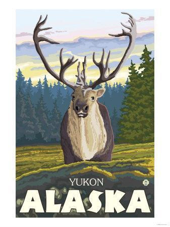 Caribou in the Wild, Yukon, Alaska