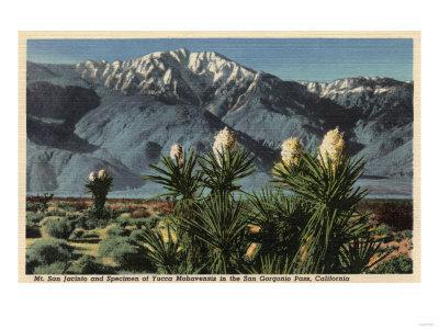 California - View of Mt. San Jacinto, Yucca Mohavensis Cactus