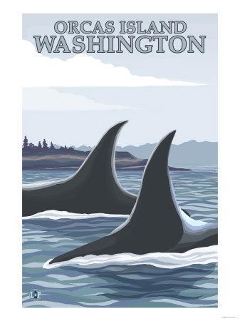 Orca Whales No.1, Orcas Island, Washington