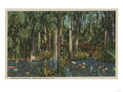 Highlands County, FL - View of Highlands Hammock