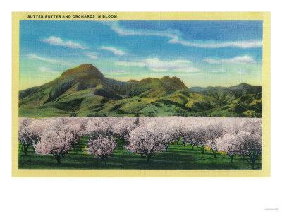 Sutter Buttes and Orchards in Bloom - Sutter Buttes, CA