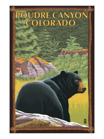 Poudre Canyon, Colorado - Bear in Forest