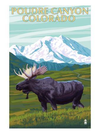 Poudre Canyon, Colorado - Moose