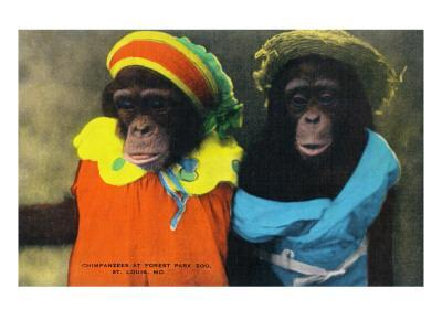 St. Louis, Missouri - Forest Park Zoo Chimpanzees in Costume