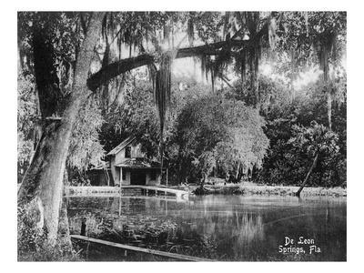 Deleon Springs, Florida - Scenic View