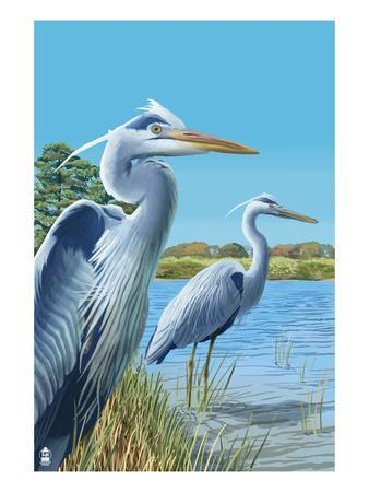 Blue Herons - East Coast