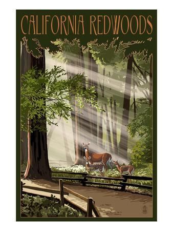 California - Deer and Fawns in Redwoods