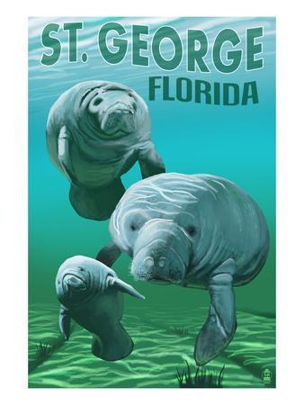 Manatees - St. George, Florida