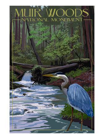 Muir Woods National Monument, California - Blue Heron