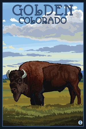 Golden, Colorado - Bison Scene