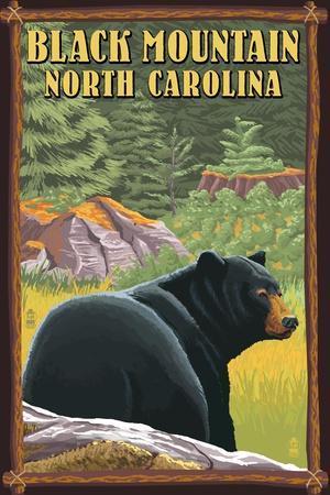 Black Mountain, North Carolina - Black Bear in Forest