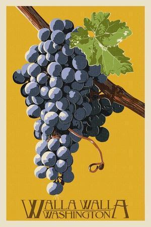 Wine Grape - Walla Walla, Washington
