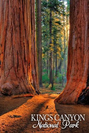 Grants Grove - Kings Canyon National Park, California