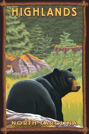Highlands, North Carolina - Black Bear in Forest