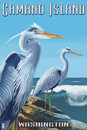 Camano Island, Washington - Blue Heron