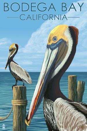 Bodega Bay, California - Brown Pellican