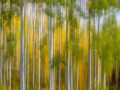 Telluride Autumn