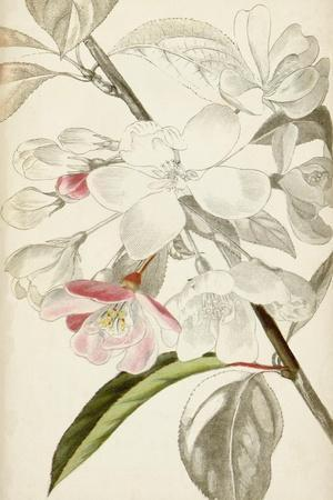 Silvery Botanicals VIII