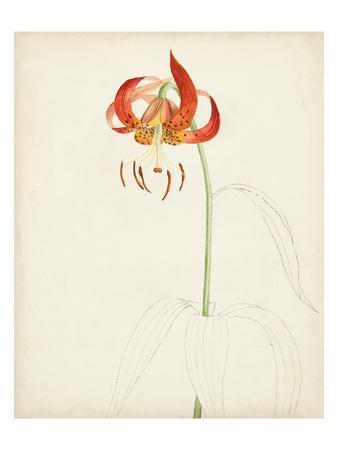 Watercolor Botanical Sketches I