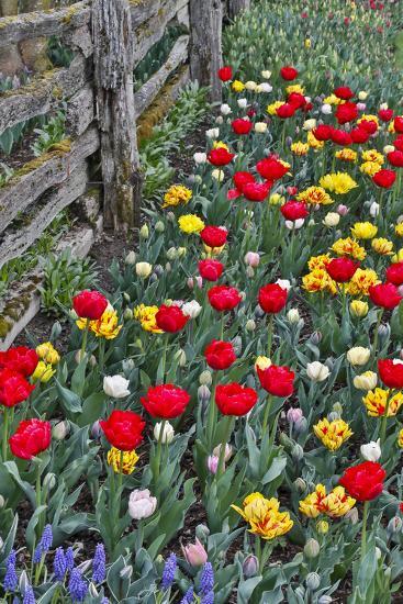 Amsterdam - a quick Tour during Tulip Season! 🌷 - Life at