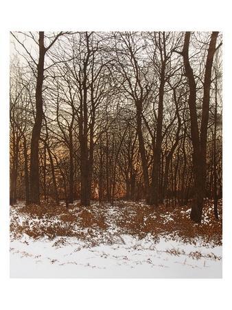 Forest Light