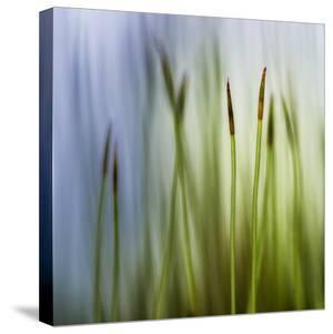 Moss by Ursula Abresch