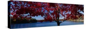 Walden Pond, Concord, Massachusetts, USA