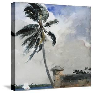 A Tropical Breeze, Nassau, 1889-90 by Winslow Homer