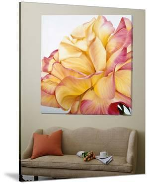 Beautiful Rose by Yvonne Poelstra-Holzaus