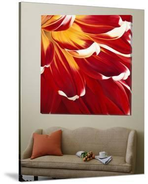 Colourful Floral I by Yvonne Poelstra-Holzaus